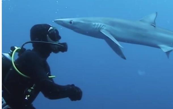 Поцелуй акулы: в ЮАР произошла неожиданная встреча аквалангиста и морского хищника (видео)