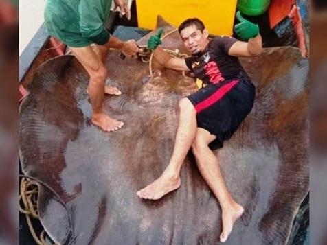 Рибалки виловили рибу вагою 280 кг